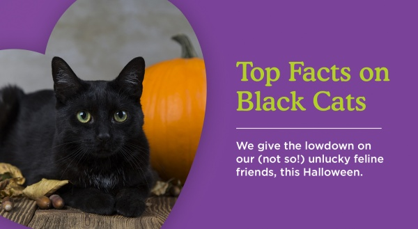 Black Cats: Not Just For Halloween