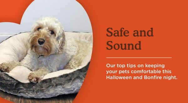 How to keep your pets comfortable on Halloween and Bonfire Night