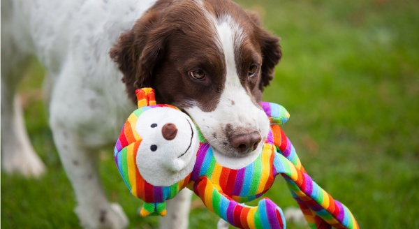 Your Guide of Toys for your Pooch
