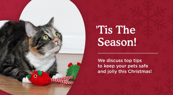 How to make sure your pets have a merry Christmas