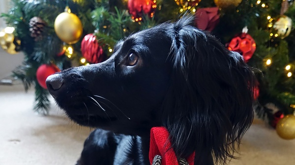 12 Tips for Happy Pets at Christmas