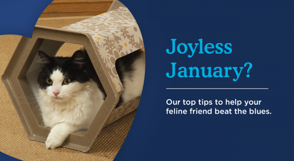 Help Your Cat Beat The January Blues