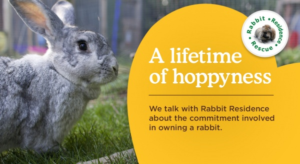 Rabbit Residence calls for greater awareness of responsible ownership
