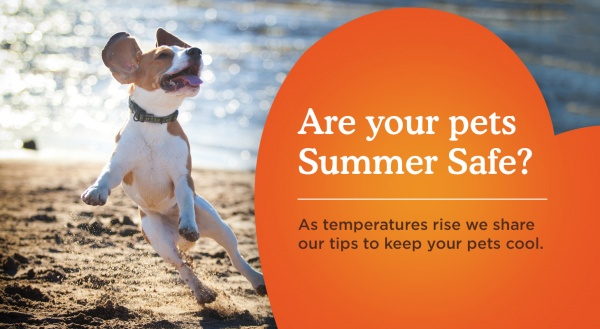 The Dos and Don'ts of Summer Pet Care