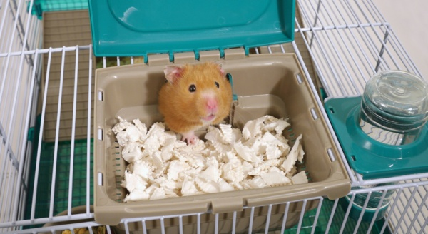 Choosing the Perfect Hamster Home for your Furry Friend
