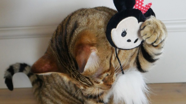 Choosing the purr-fect toys and treats this Christmas for your pet